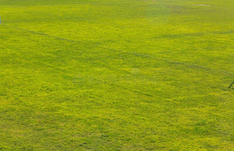 Fundo da textura da grama verde fotos de stock royalty free