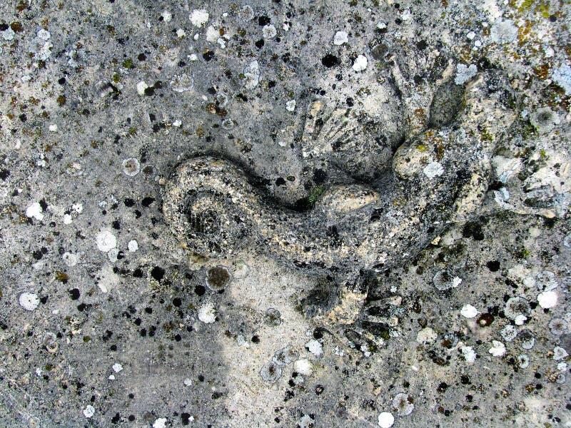 Fundo da textura da parede de pedra do Grunge com lagarto imagens de stock