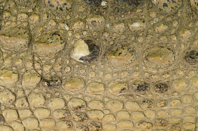 Textura da pele do crocodilo foto de stock