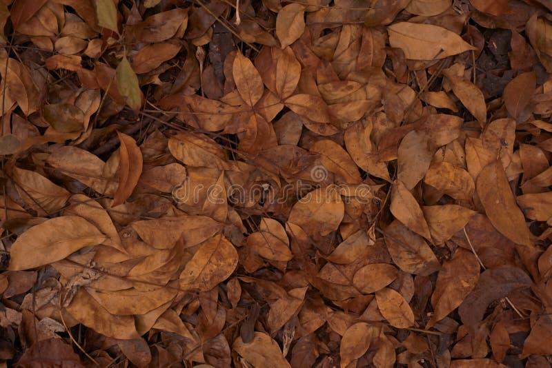 Fundo da textura das folhas fotografia de stock