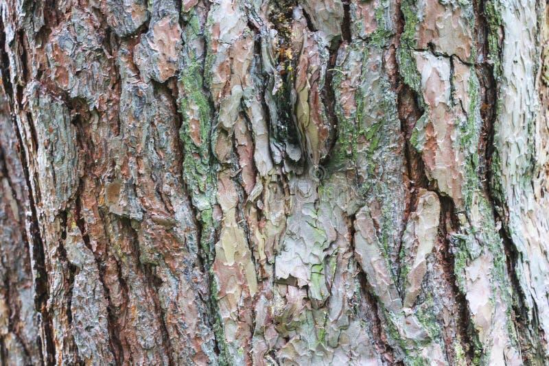 Fundo da textura da folhosa Fundo de madeira velho da textura da prancha imagens de stock royalty free