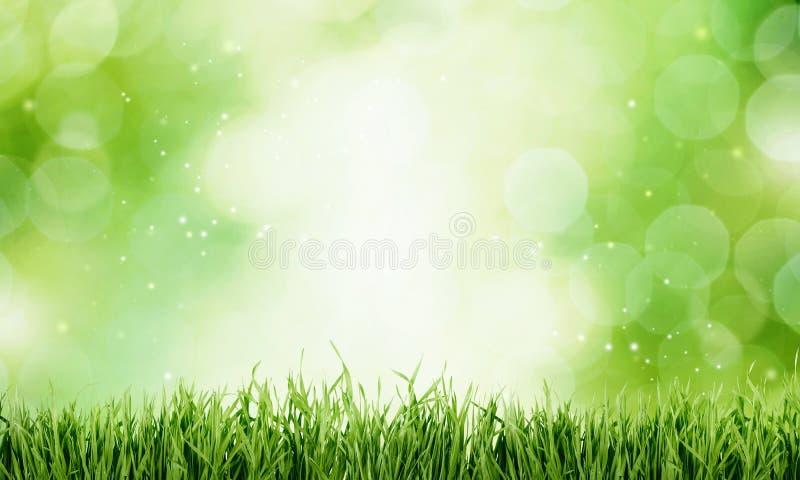 Fundo da textura da grama verde, opinião do close-up ilustração stock