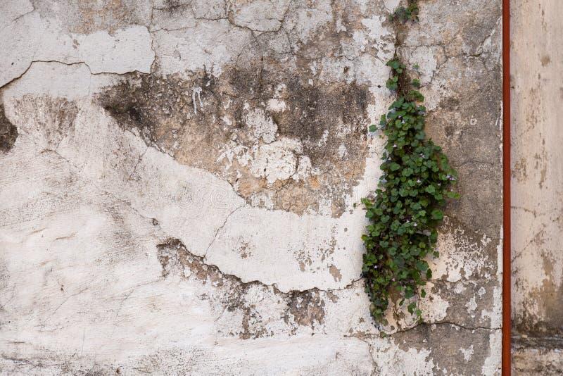 Fundo da textura da parede de Grunge Fundo perfeito espaçado foto de stock