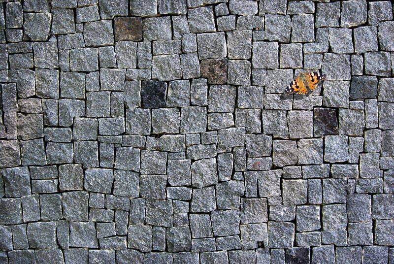 Fundo da textura da parede de pedra parede de blocos cinzentos do granito borboleta que senta no pedras borboleta pintada da senh fotos de stock