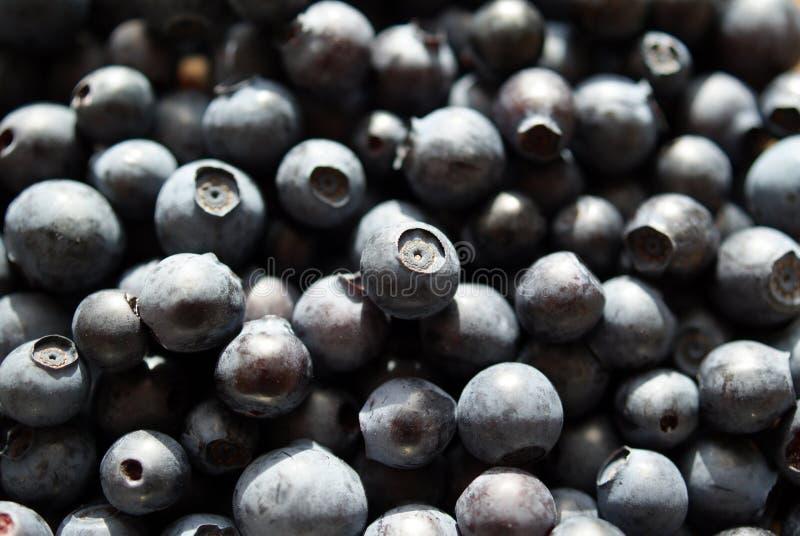 Fundo da uva-do-monte foto de stock royalty free