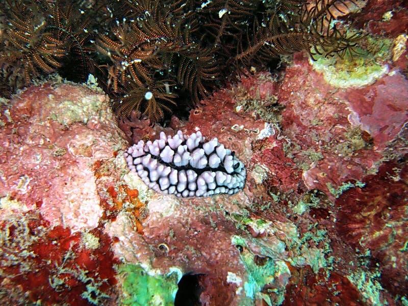 Fundo da vida marinha fotografia de stock