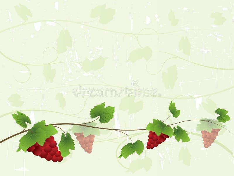 Fundo da videira com uvas vermelhas ilustração royalty free