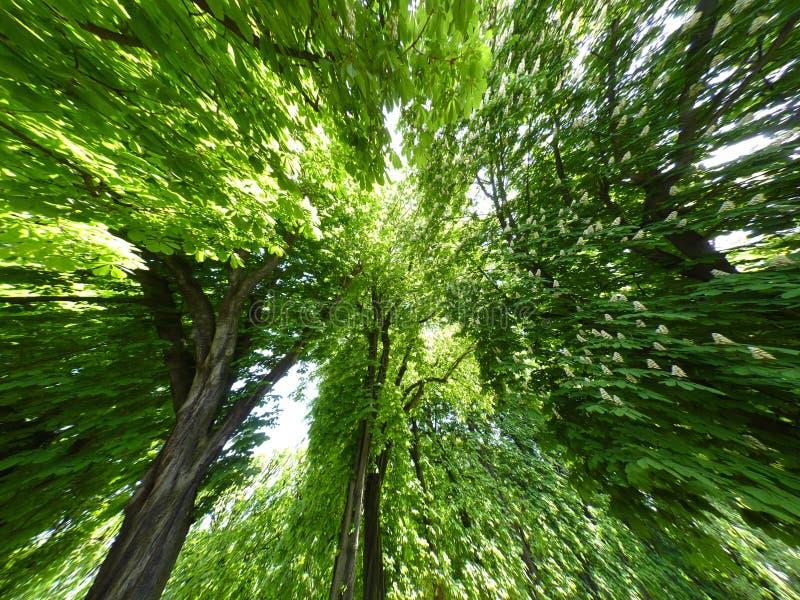 Fundo Das árvores Fotografia de Stock Royalty Free