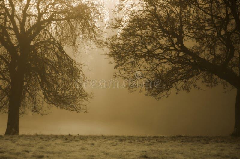 Fundo das árvores foto de stock royalty free