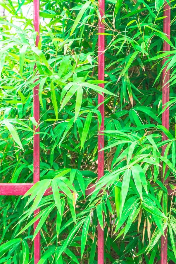 Fundo das cercas da grade e das folhas do bambu fotografia de stock royalty free