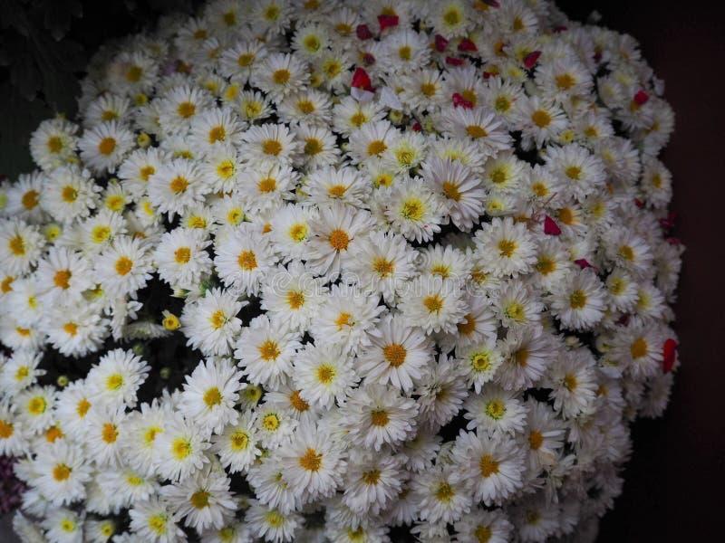 Fundo das flores brancas do close-up imagens de stock royalty free