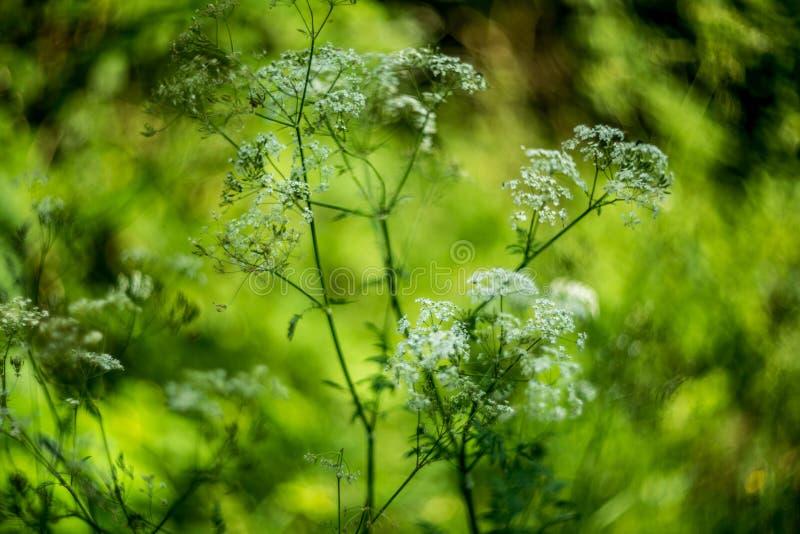 Fundo das flores selvagens fotografia de stock