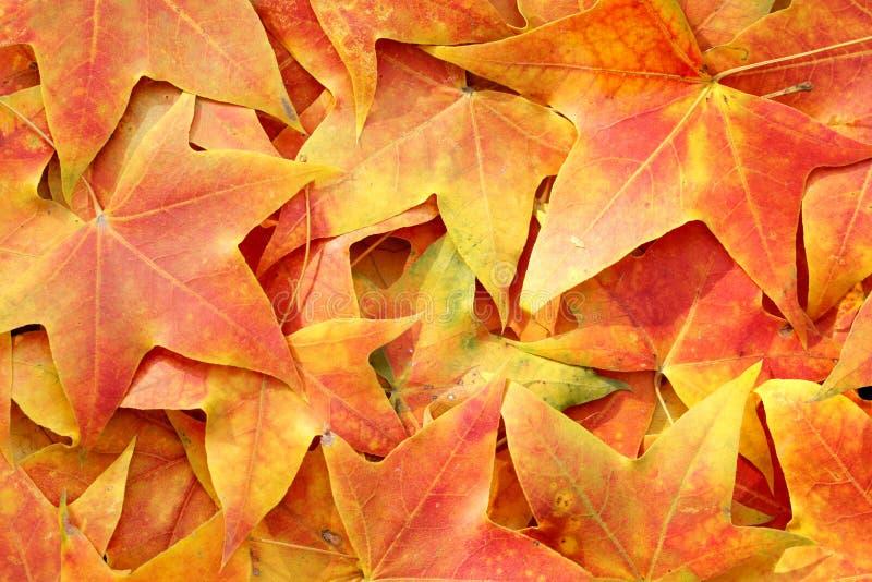 Download Fundo das folhas de outono imagem de stock. Imagem de outubro - 16868743