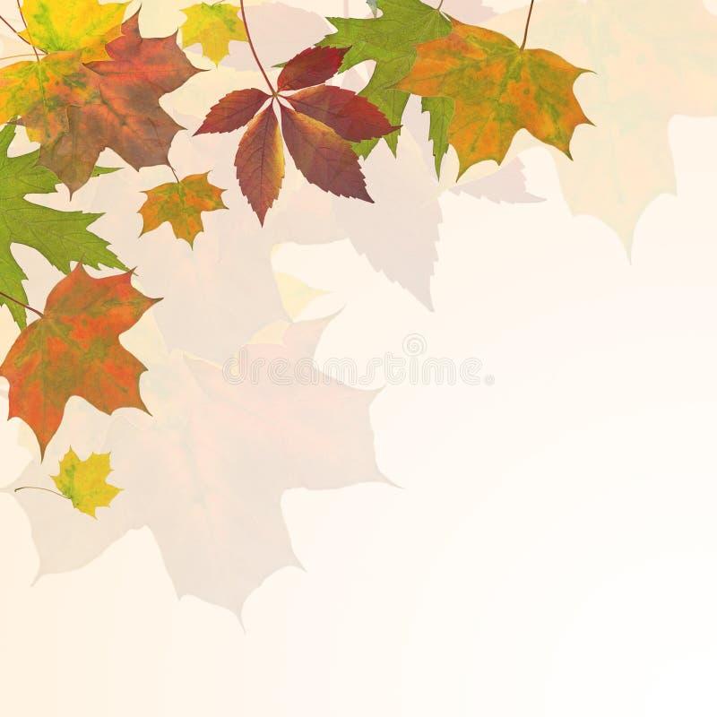 Fundo das folhas de outono ilustração royalty free