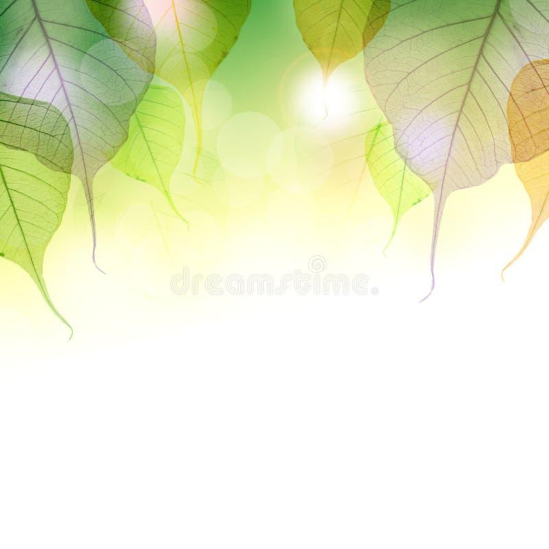 Download Fundo das folhas de outono ilustração stock. Ilustração de verde - 26512911