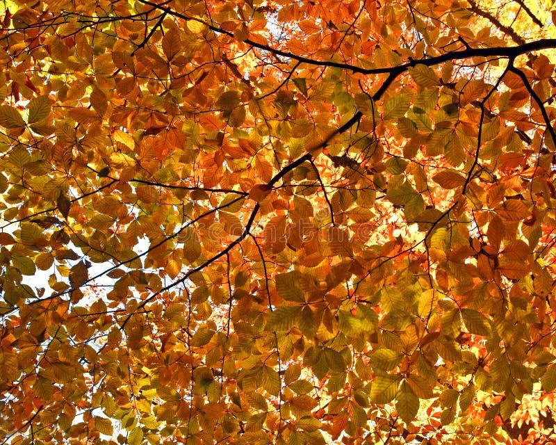 Fundo das folhas de outono amarelas imagem de stock