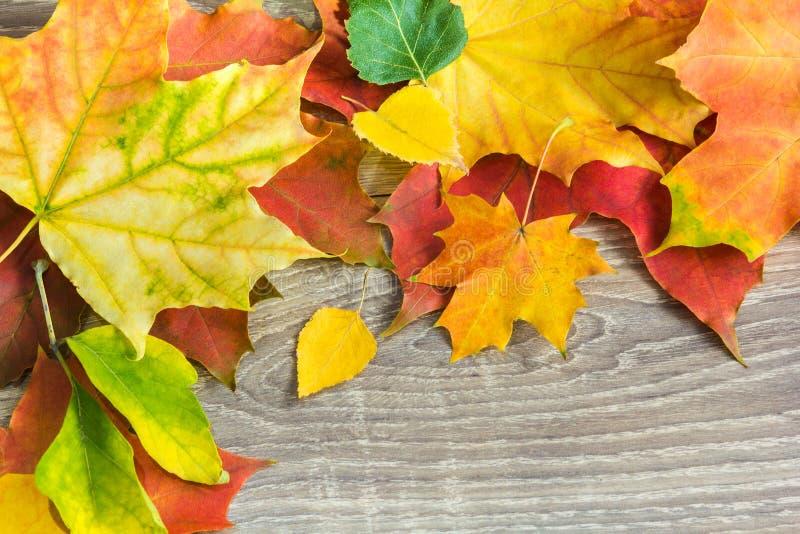 Fundo das folhas de outono na madeira fotografia de stock royalty free