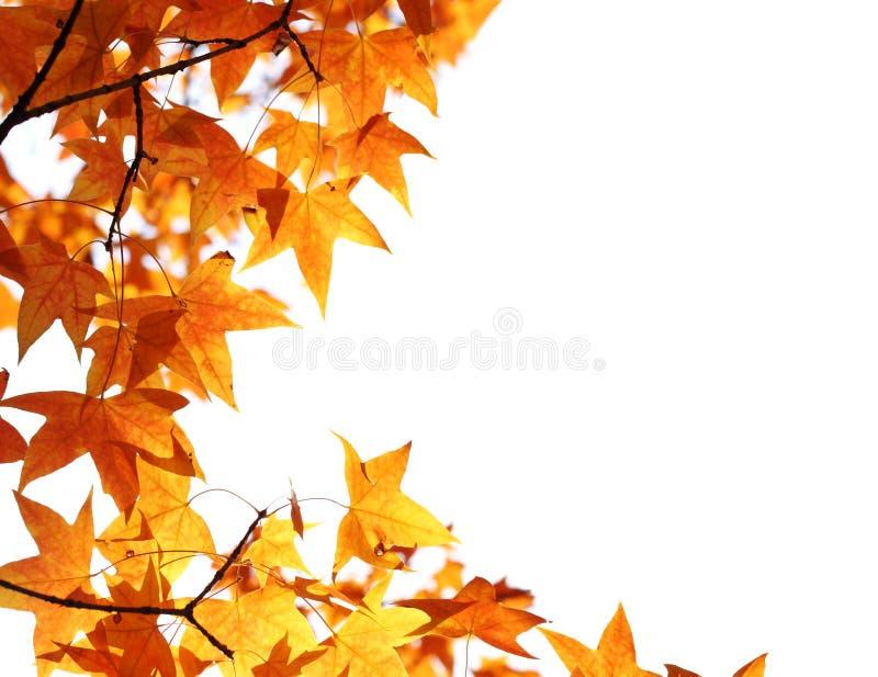Download Fundo Das Folhas De Plátano Foto de Stock - Imagem de outono, outubro: 16868332