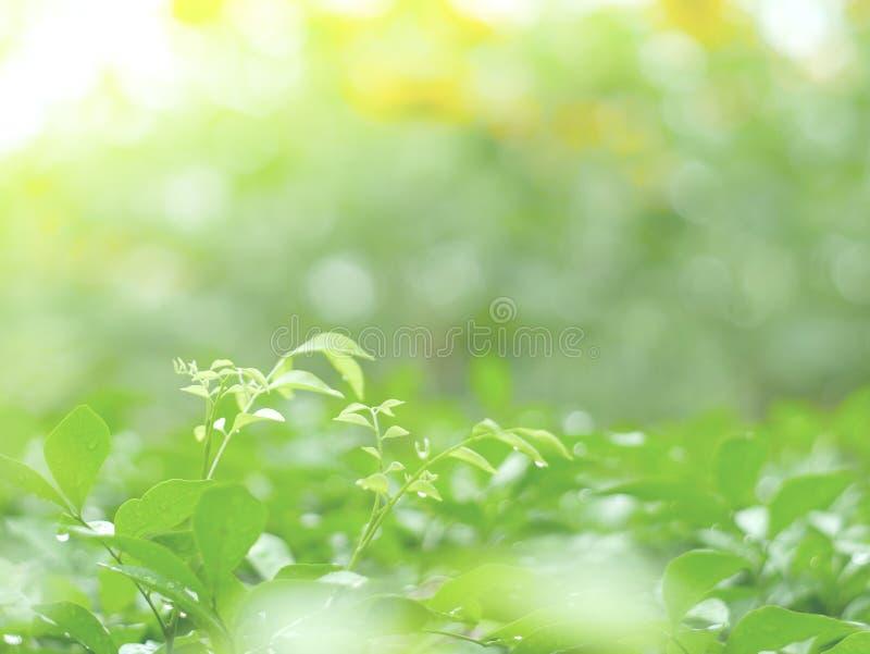 Fundo das folhas e textura do abstrack para o papel de parede e calmo verdes bonitos imagens de stock