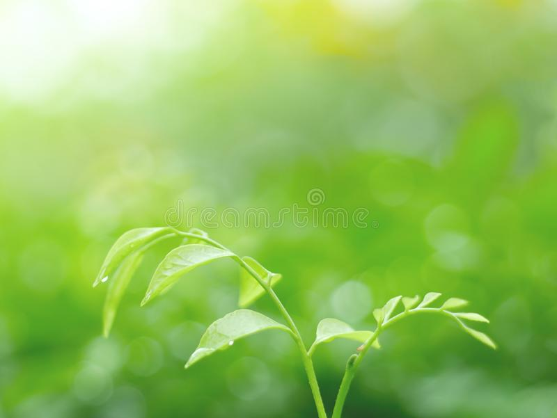 Fundo das folhas e textura do abstrack para o papel de parede e calmo verdes bonitos fotos de stock royalty free