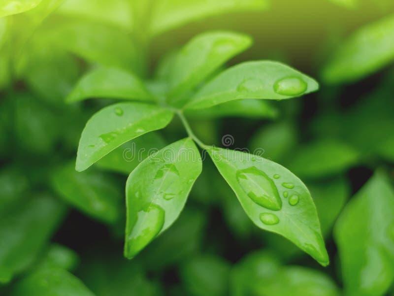 Fundo das folhas e textura do abstrack para o papel de parede e calmo verdes bonitos foto de stock