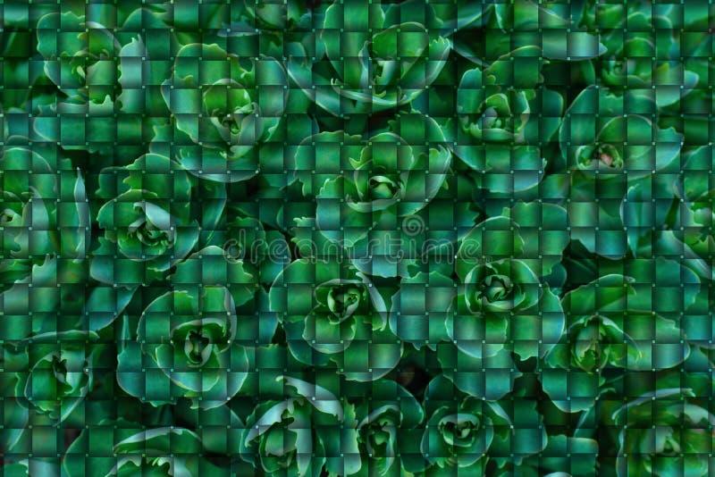 Fundo das folhas verdes sob a forma dos enigmas Fundo dos enigmas Conceitos verdes fotos de stock