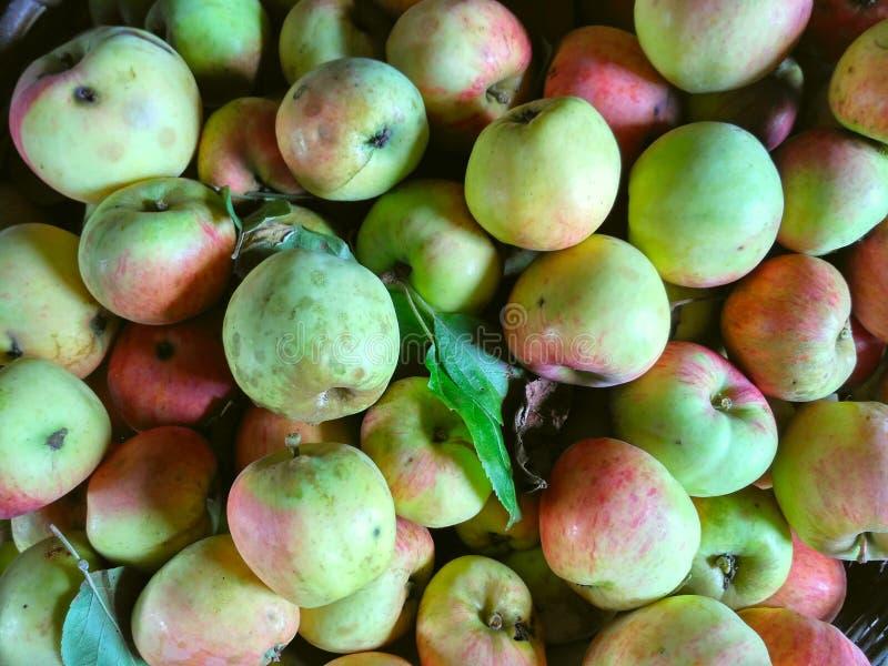 Fundo das maçãs, colheita rica das maçãs imagem de stock royalty free