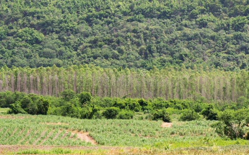 Fundo das madeiras da natureza das árvores de floresta fotografia de stock