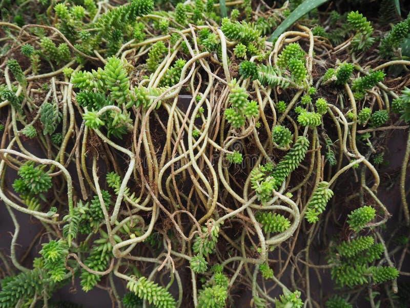 Fundo das plantas decorativas foto de stock royalty free