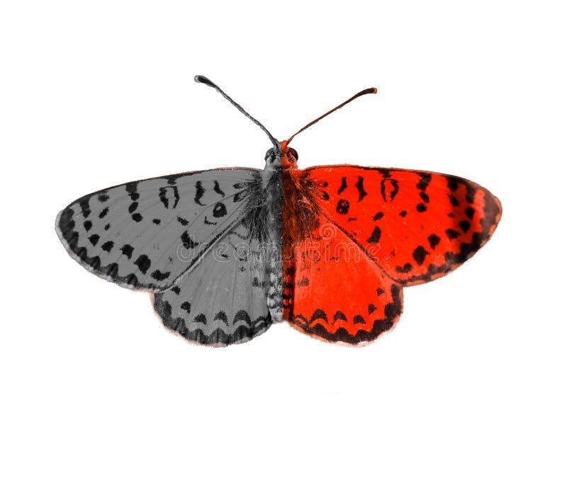 Fundo de auto-teste da borboleta mental bipolar do disorter fotografia de stock royalty free