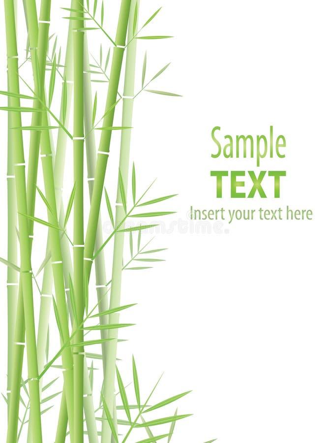 Fundo de bambu ilustração royalty free