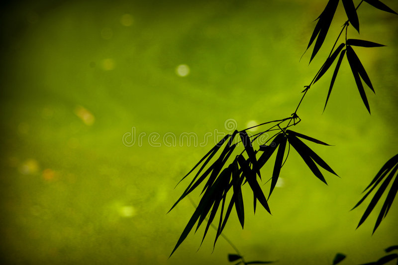 Fundo de bambu fotos de stock royalty free