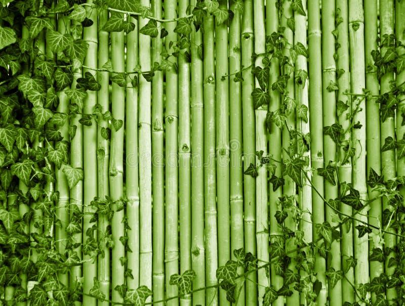 Fundo de bambu imagens de stock