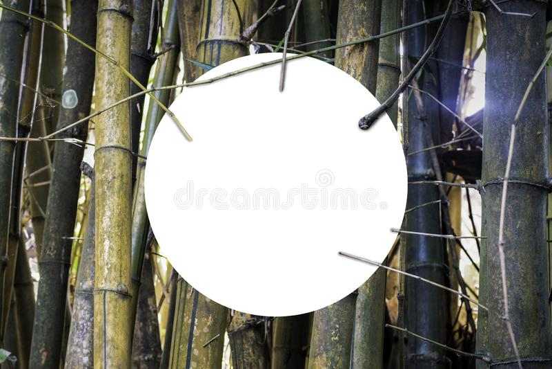 Fundo de bambu amarelo imagem de stock
