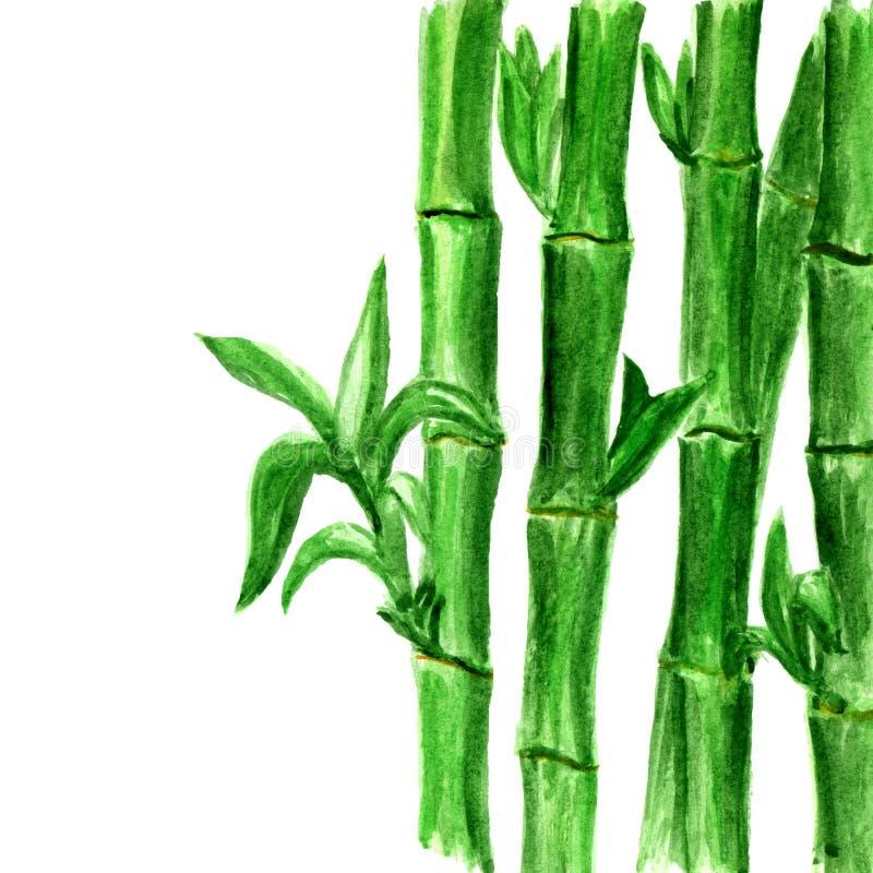 Fundo de bambu da aquarela no branco ilustração do vetor