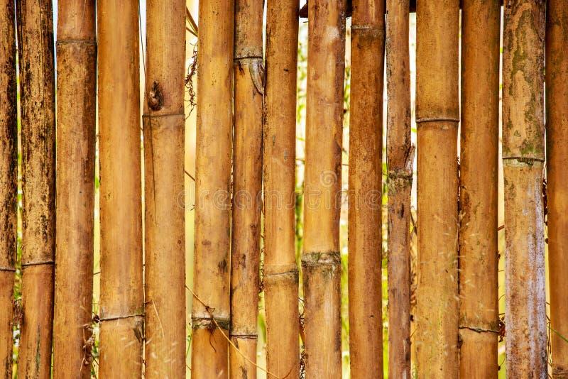 Fundo de bambu da cerca imagem de stock