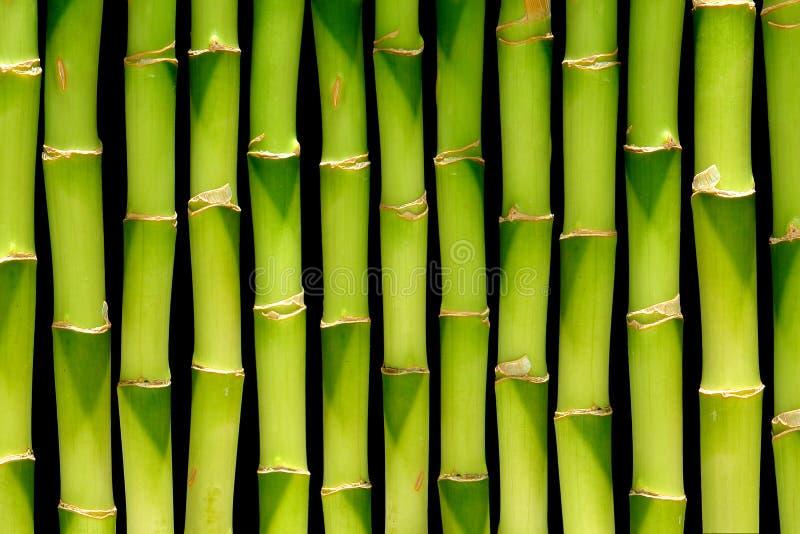 Fundo de bambu da haste imagem de stock royalty free