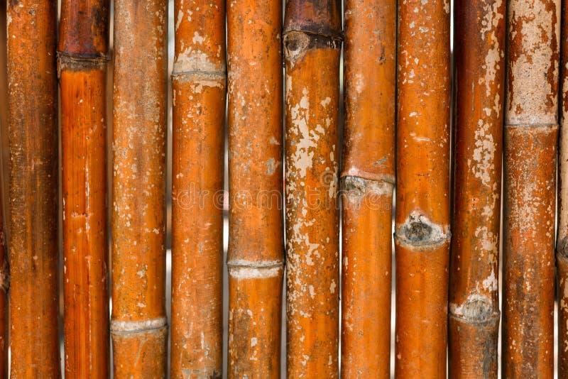 Fundo de bambu da parede em Ásia Textura de bambu Close up das árvores de bambu foto de stock royalty free