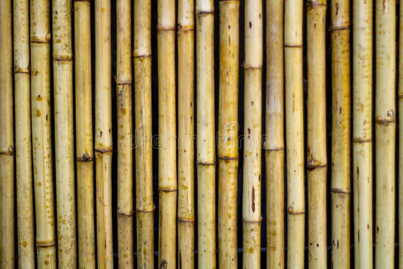 Fundo de bambu da textura da parede , ascendente próximo fotos de stock