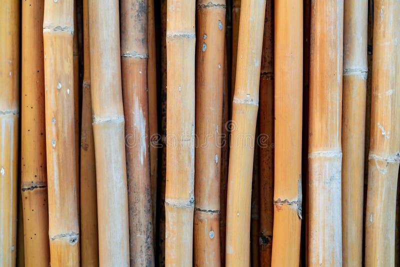 Fundo de bambu secado close up da textura do polo Fundo de Eco Material da natureza para o trabalho feito a mão em Tailândia Cerc fotografia de stock royalty free