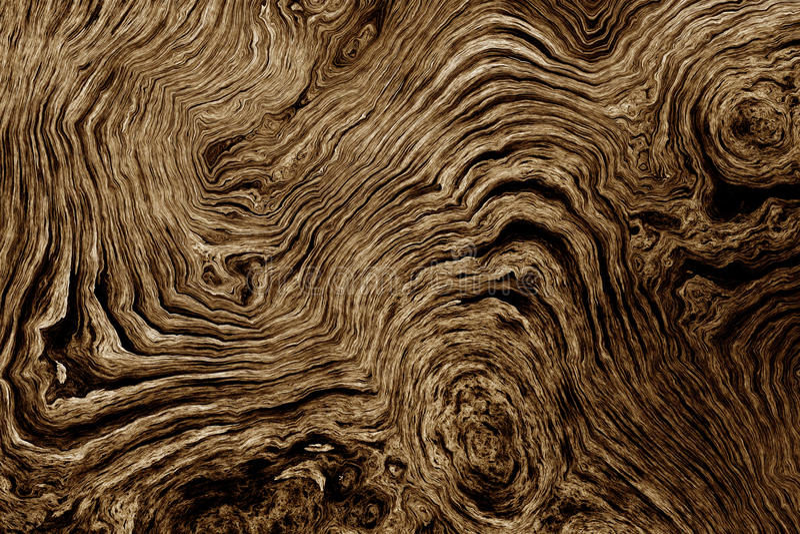 Fundo de Brown com teste padrão da raiz da árvore ilustração royalty free