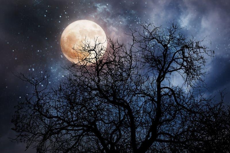 Fundo de Dia das Bruxas com lua e a árvore inoperante fotografia de stock