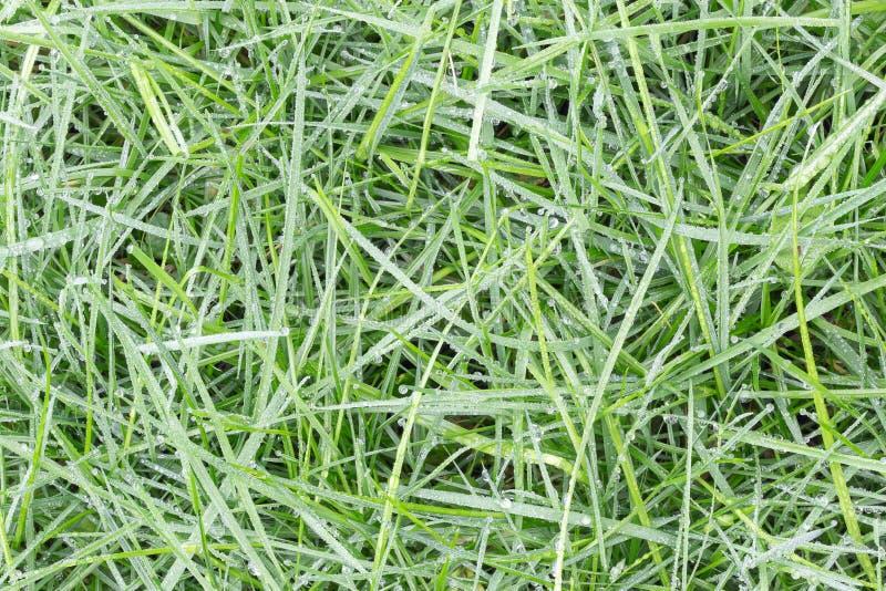 Fundo de gotas de orvalho em verde-claro Fundo da grama fotos de stock