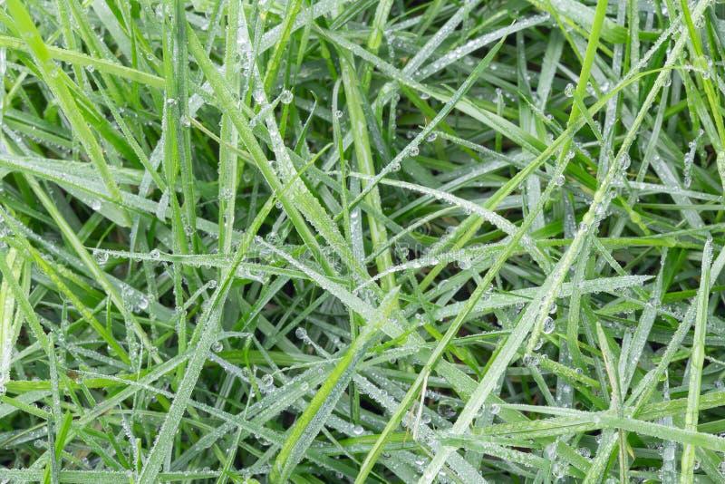 Fundo de gotas de orvalho em verde-claro Fundo da grama fotografia de stock
