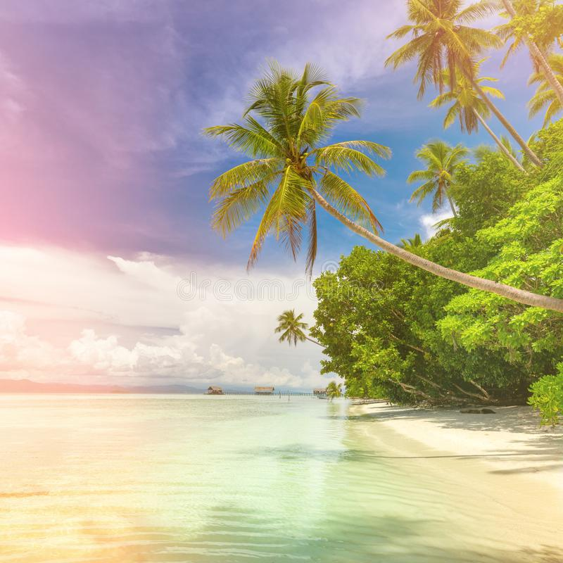 Fundo de Idillyc da praia tropical da ilha - oceano calmo, palmeiras, céu azul imagem de stock royalty free