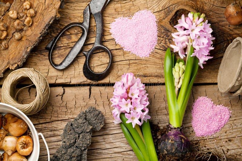 Fundo de jardinagem com flor e bulbos na tabela de madeira fotos de stock royalty free