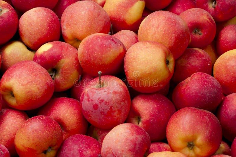 Fundo de maçãs vermelhas fotos de stock