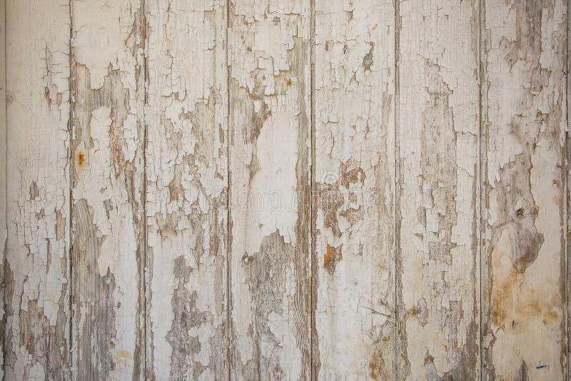Fundo de madeira branco/cinzento da textura com testes padrões naturais fotografia de stock