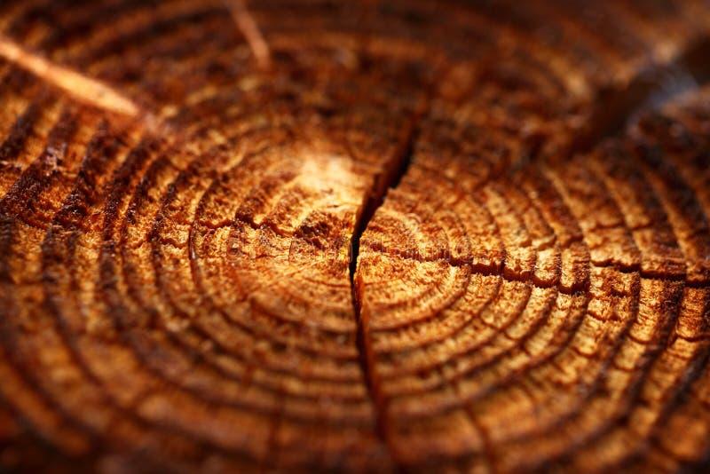 Fundo de madeira com anéis de crescimento rachado imagens de stock