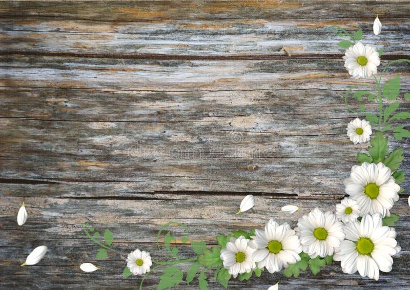 Fundo de madeira com camomila foto de stock